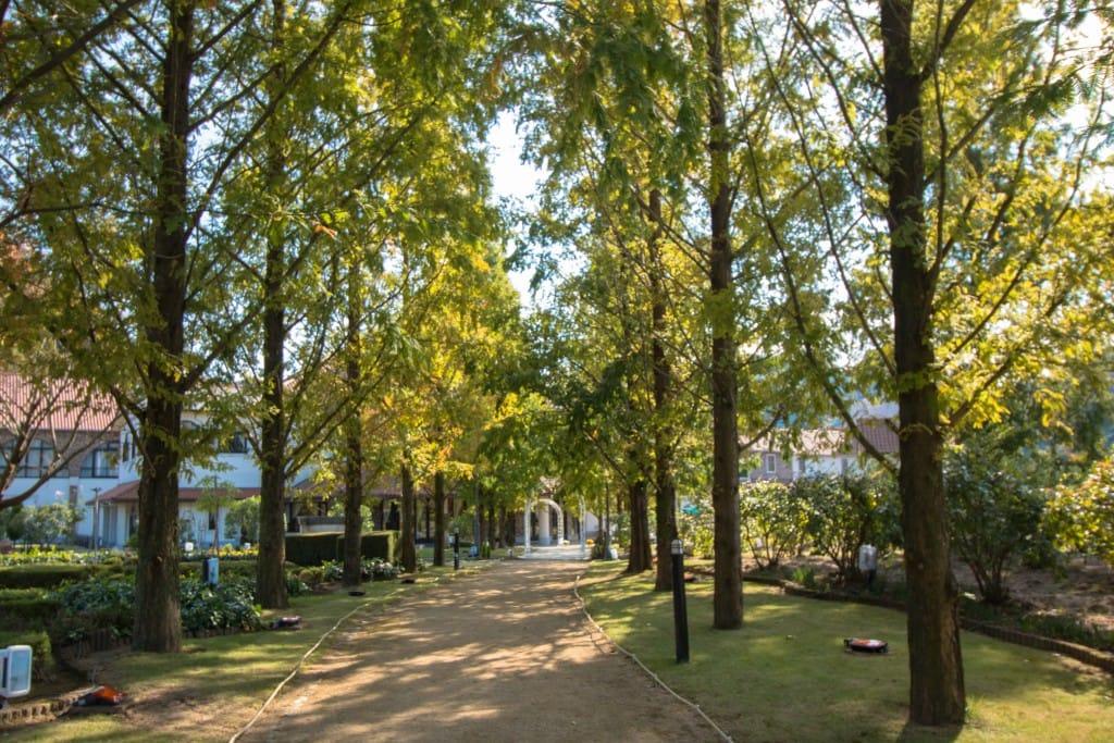 ヨーロピアンガーデン並木道