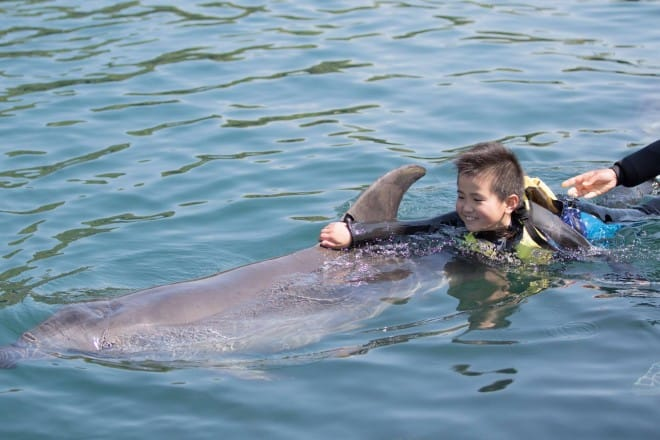 イルカに乗って遊ぶ男の子