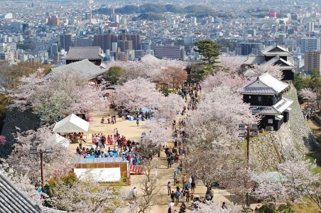 松山城桜満開