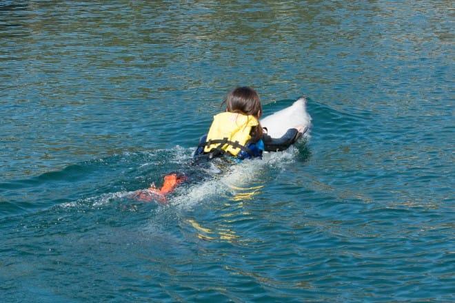 イルカのヒレにつかまって泳ぐ