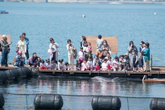 伯方島イルカ見るプログラム