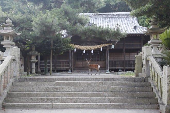 鹿と鹿島神社