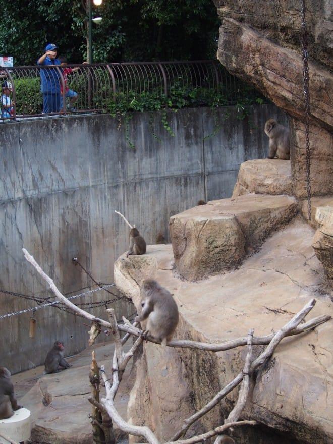とべ動物園サル山