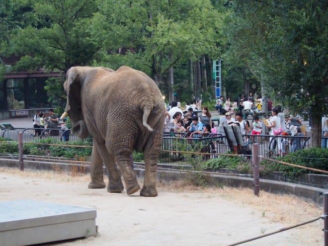 とべ動物園内観写真2