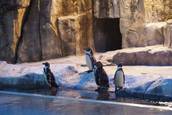 とべ動物園ペンギン1