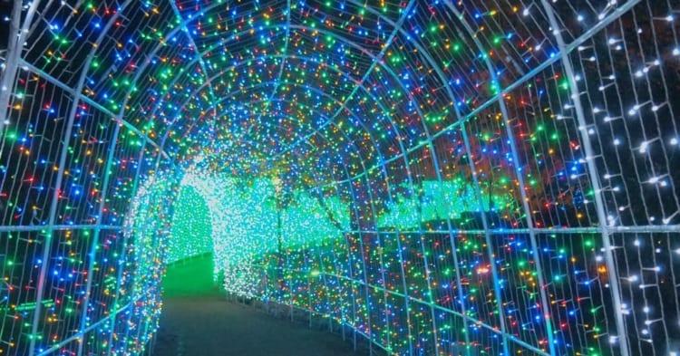 タオル美術館イルミネーション光のトンネル5