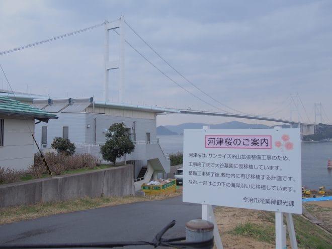 サンライズ糸山河津桜