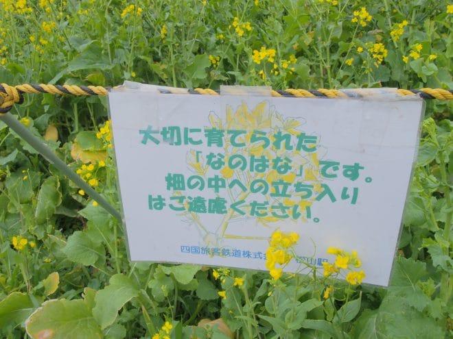 閏住の菜の花畑看板1