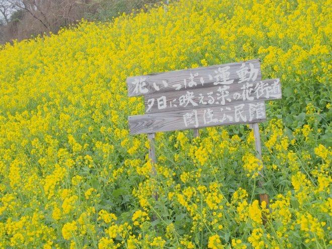 閏住の菜の花畑看板3