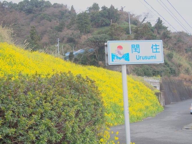閏住の菜の花畑看板2