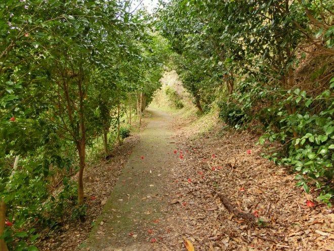 椿の遊歩道