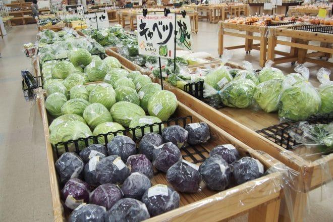 あさつゆ野菜3