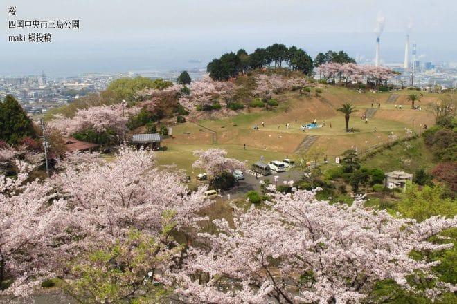 四国中央市三島公園の桜