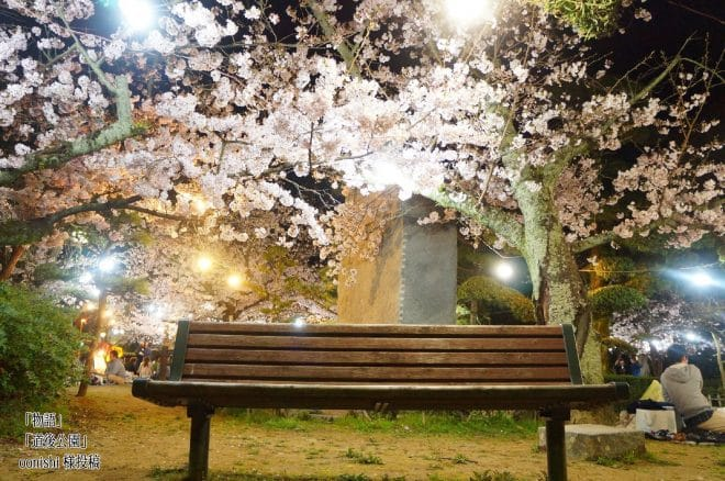 道後公園桜2