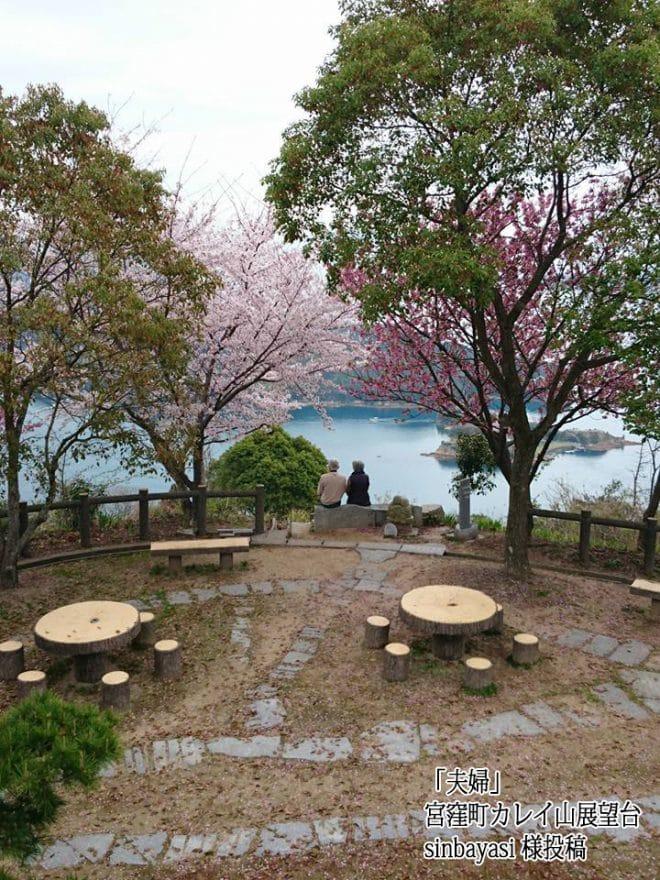 カレイ山展望台桜