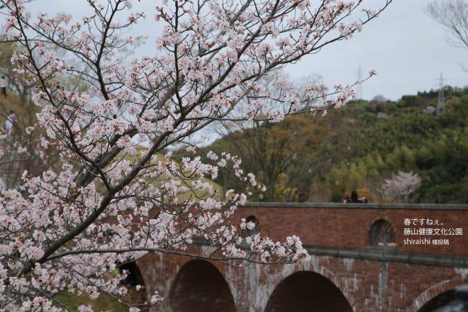 藤山健康文化公園桜