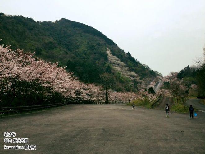 今治市朝倉緑水公園桜