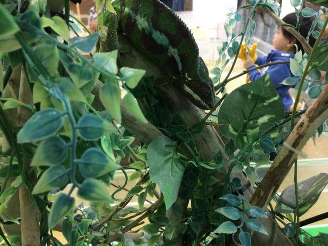 木と同化爬虫類