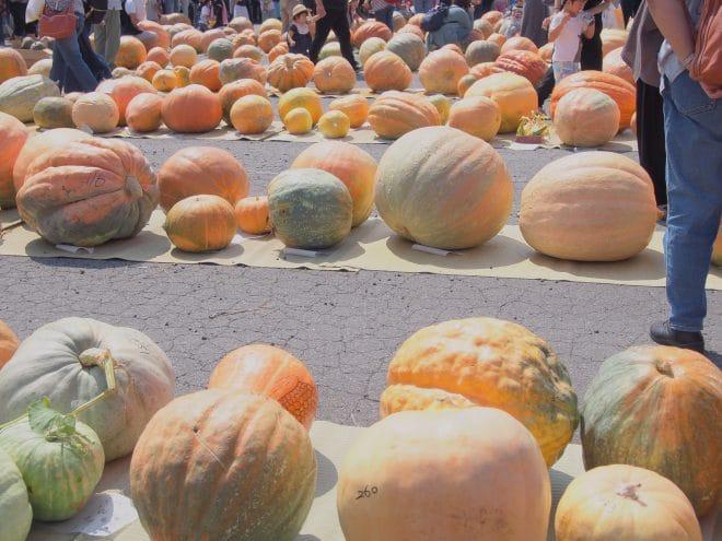 どてかぼちゃカーニバルの様子2