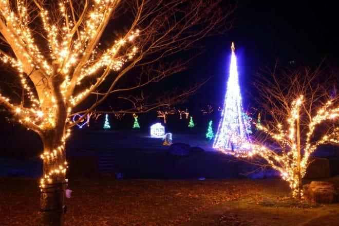 中山池イルミネーション_広場の木とツリー
