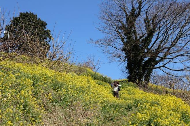 黄色い丘1