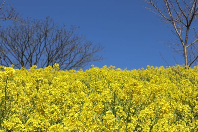 黄色い丘3