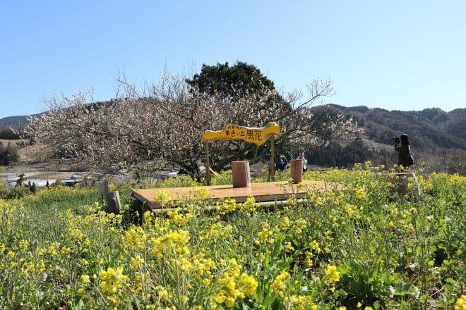 黄色い丘ステージ