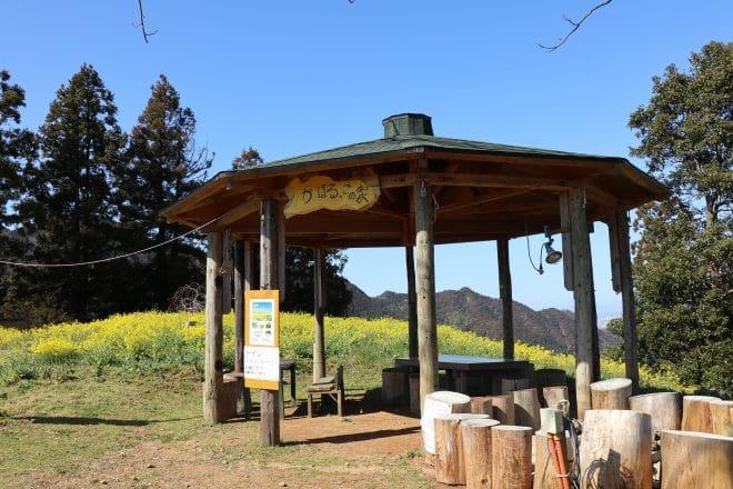 黄色い丘5