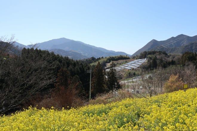 黄色い丘7