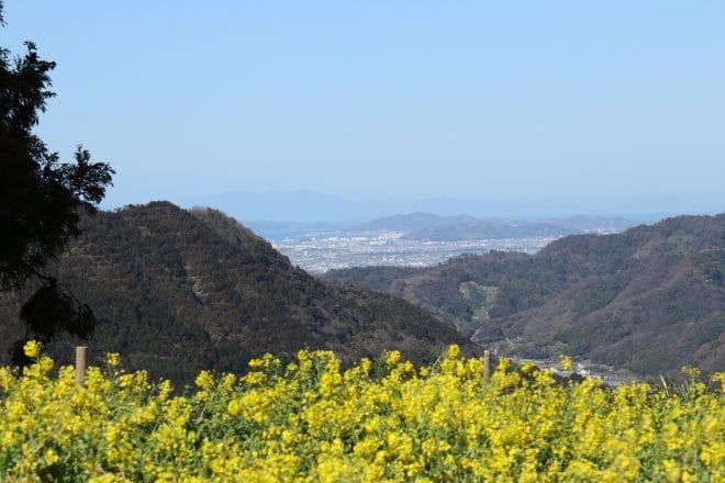 黄色い丘6