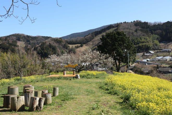 黄色い丘9