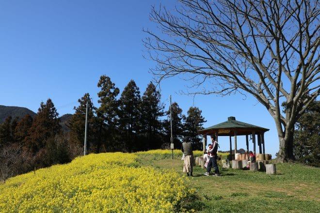 黄色い丘4