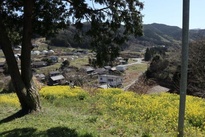黄色い丘8