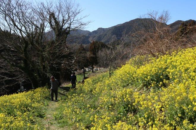 黄色い丘2