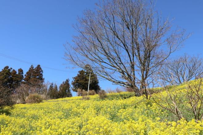 黄色い丘10