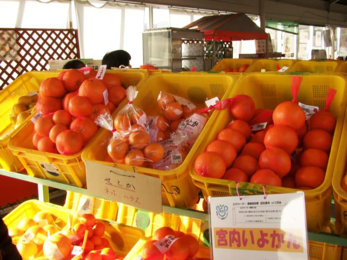 柑橘売り場