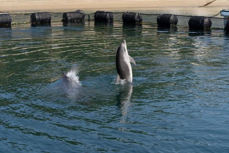 赤ちゃんイルカの写真5