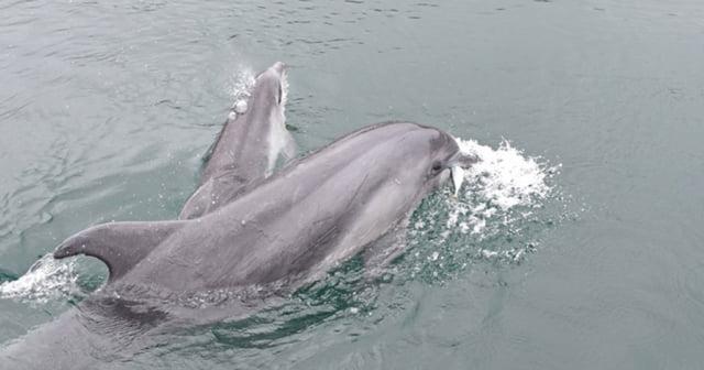 イルカの赤ちゃん