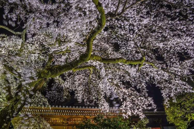 桜フォトコン2020ギャラリー