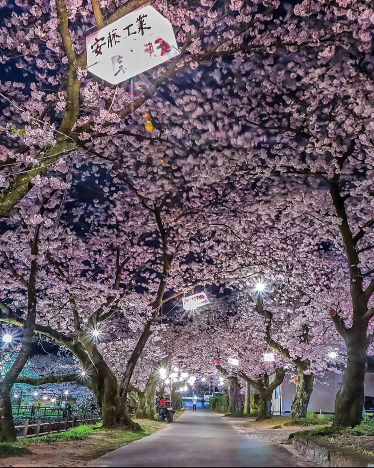 桜フォトコン2020優秀賞