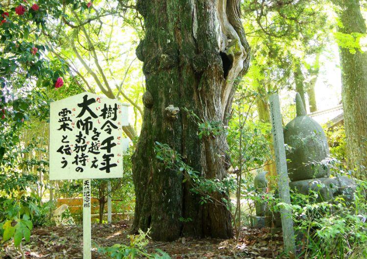 浄瑠璃寺 大木