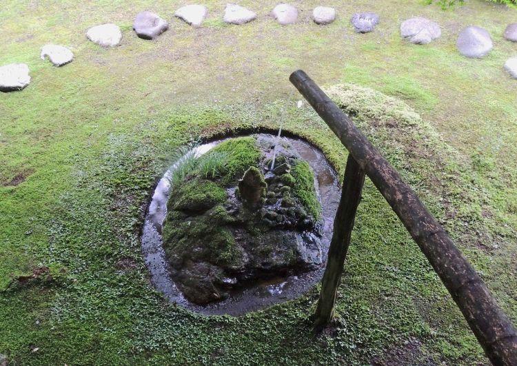 苔筵 庭4