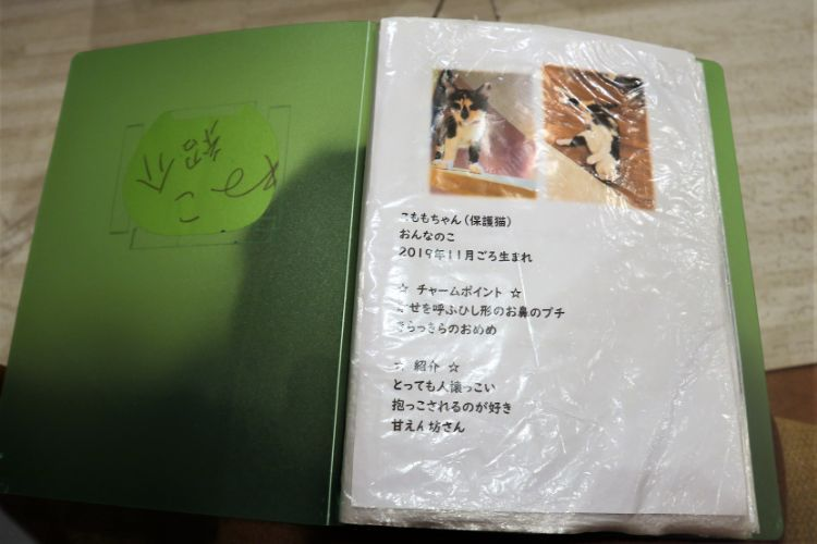 日なたの窓 猫紹介12