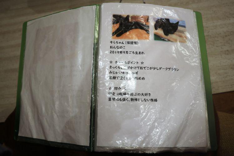 日なたの窓 猫紹介11
