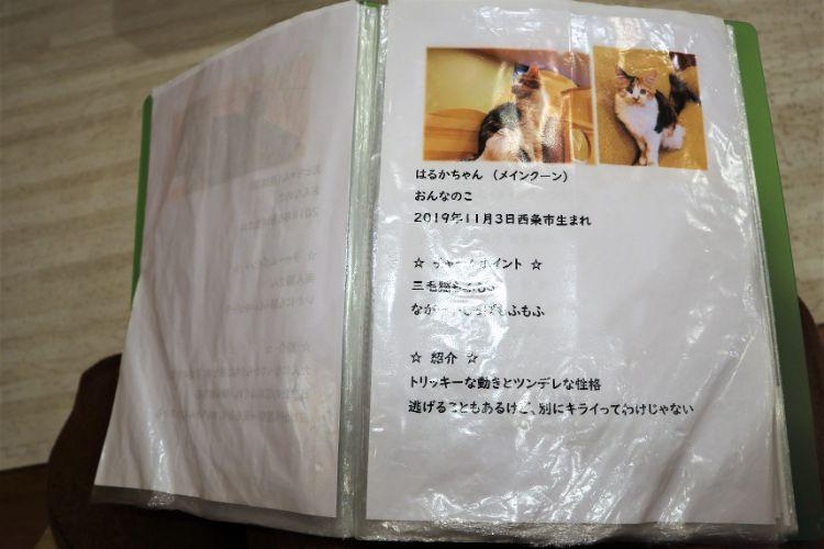 日なたの窓 猫紹介7