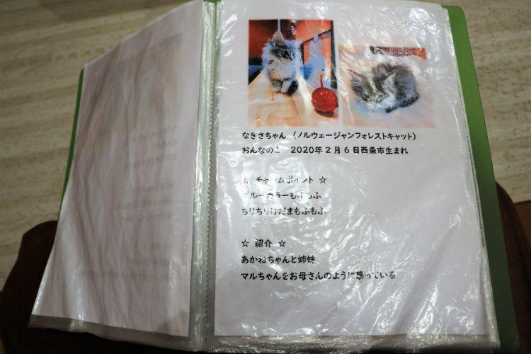 日なたの窓 猫紹介5