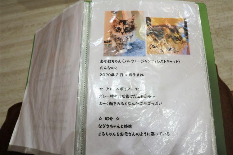 日なたの窓 猫紹介3