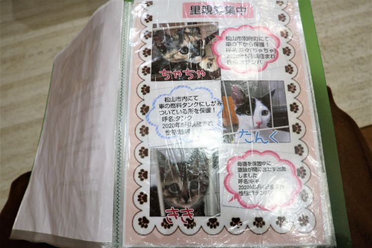 日なたの窓 猫紹介1