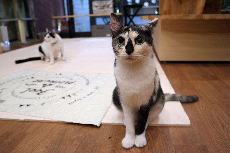 日なたの窓 猫4