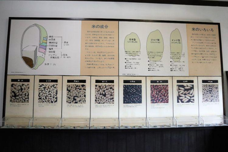 宇和米博物館 米 展示